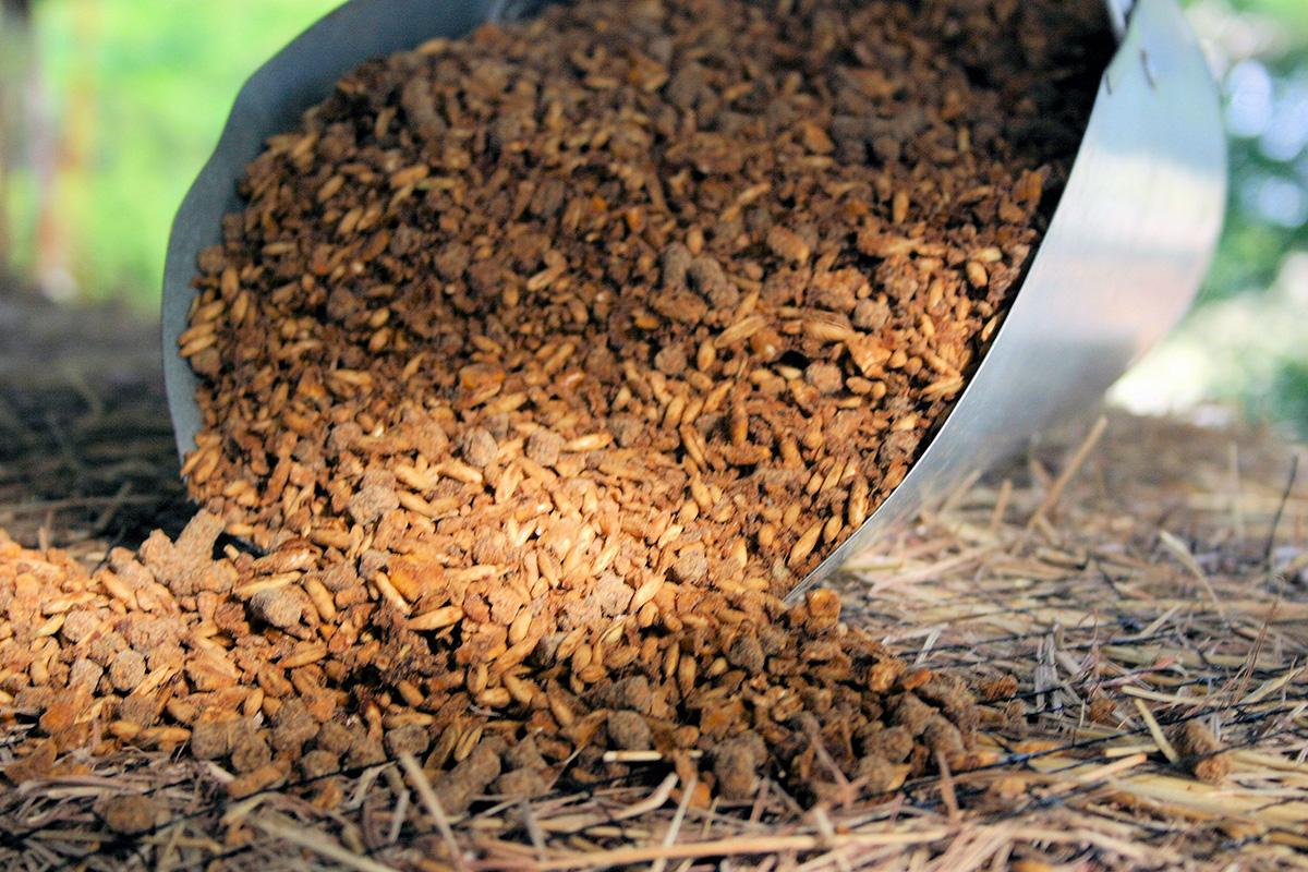 beet pulp feed