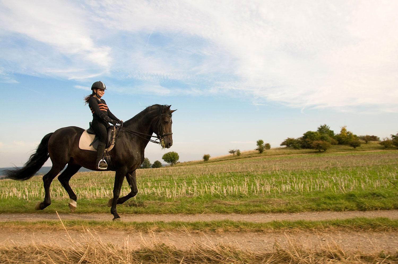 horse riding routine